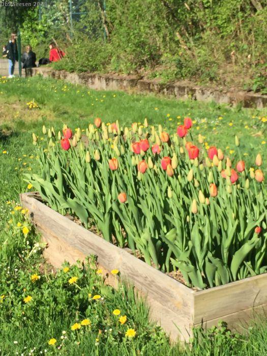 Blumen im Schulgarten
